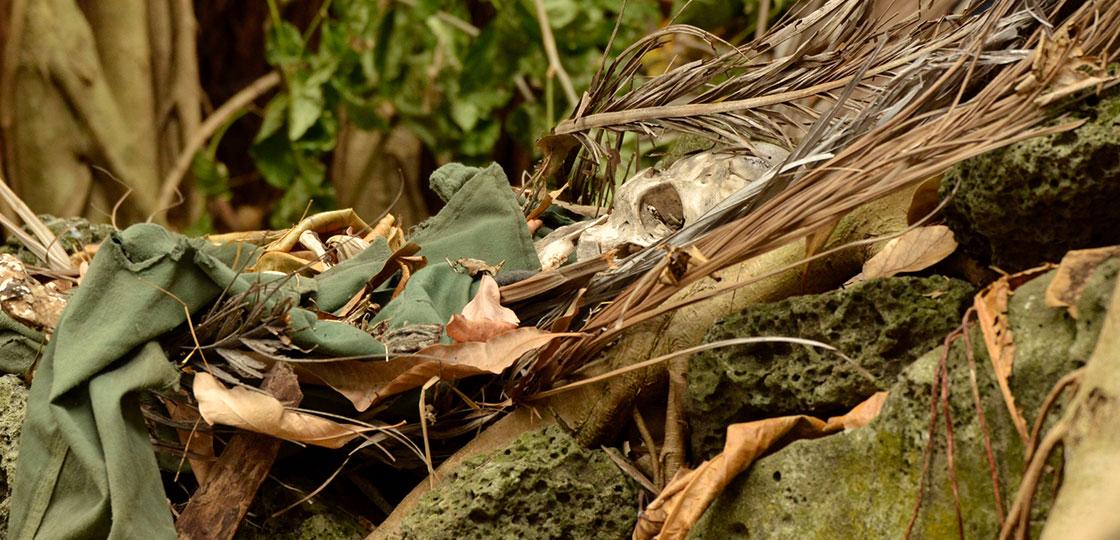 zwei-familien-auf-der-palme-skelett
